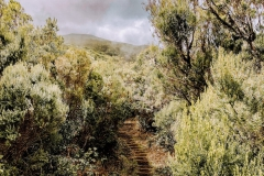 Madeira Adventureland Off Road 4