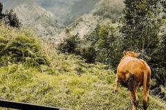 Madeira Adventureland Off Road_
