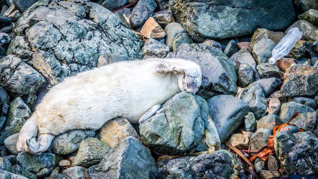 Seal Plastic