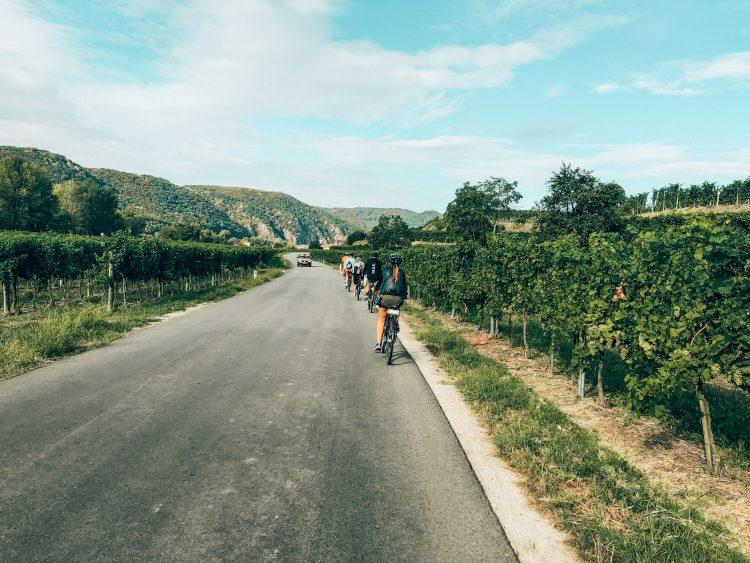 A-Rosa Fahrradtour Weinberge
