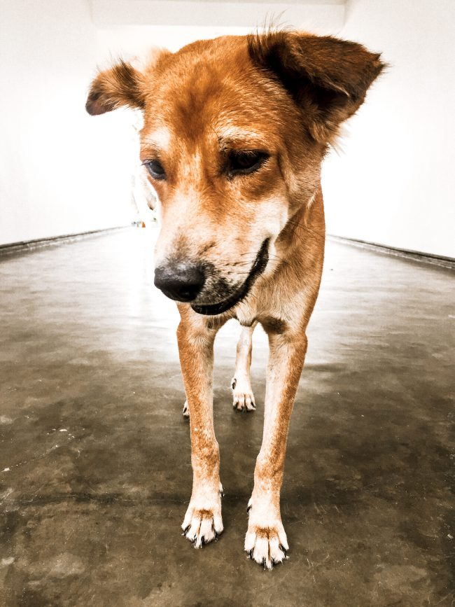 Sri Lanka Hunde lifestylecircus