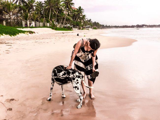 Sri Lanka Beach Dogs lifestylecircus