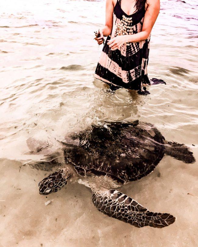Sri Lanka Schildkröten Lifestylecircus