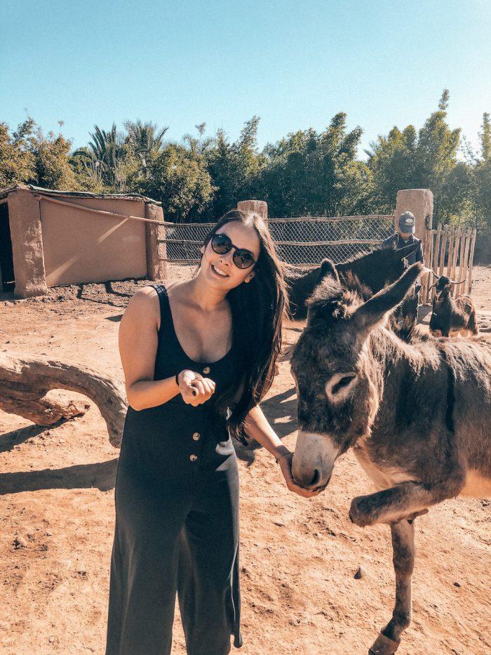 Mandarin Oriental Marrakech Donkey